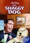 Shaggy Dog (DVD)