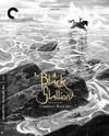 Black Stallion (Region 1 DVD)