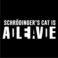 Schrodinger's Cat Womens T-Shirt Black (Small) - Cover