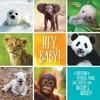 Hey, Baby! - Stephanie Warren Drimmer (Hardcover)