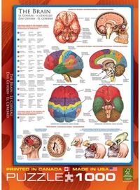 Eurographics - The Brain Puzzle (1000 Pieces) - Cover