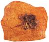 Amatikulu - Chew Deli Mince On Toast