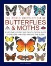 The World Encyclopedia Of Butterflies & Moths - Sally Morgan (Hardcover)