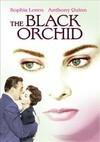 Black Orchid (Region 1 DVD)