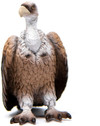 Schleich - Vulture